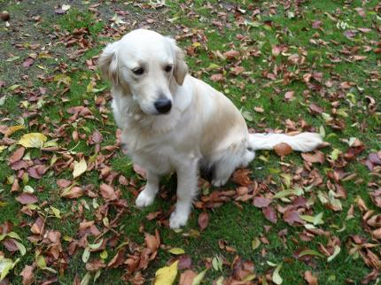 Bonsaviour Cream Retriever