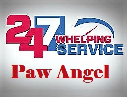 Paw Angel  Pet Services
